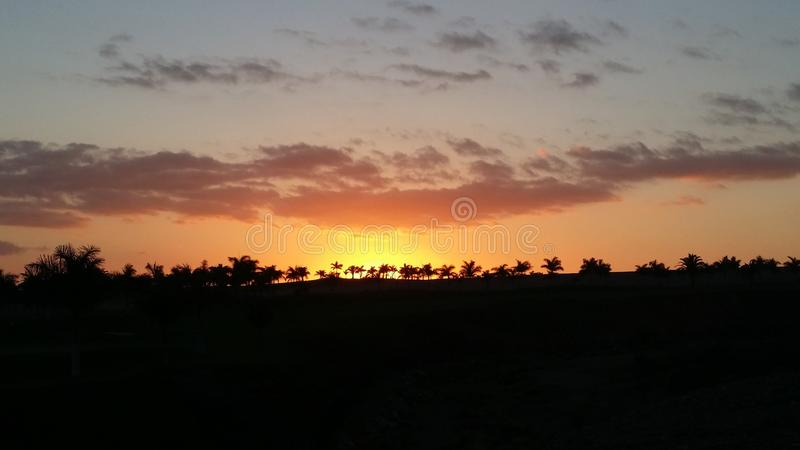 Orange sunset with palms stock image