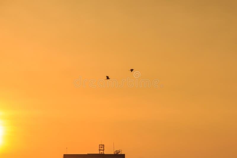Orange sunset sky over building background. Yellow sky background during sunset. royalty free stock image