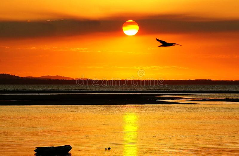 Sunset Bird in Flight. The orange sunset with smoke haze and a bird in flight across its path. The Town of 1770 is a popular place to stay. Tourists flock to The royalty free stock photos