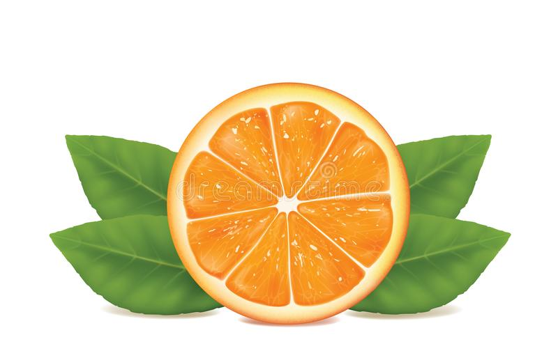 Orange sur le fond blanc illustration libre de droits