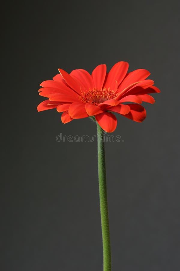 Orange sur le noir photos libres de droits