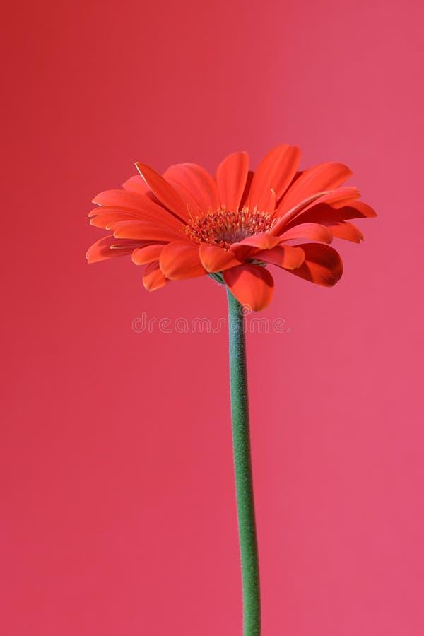 Orange sur le rouge photographie stock libre de droits