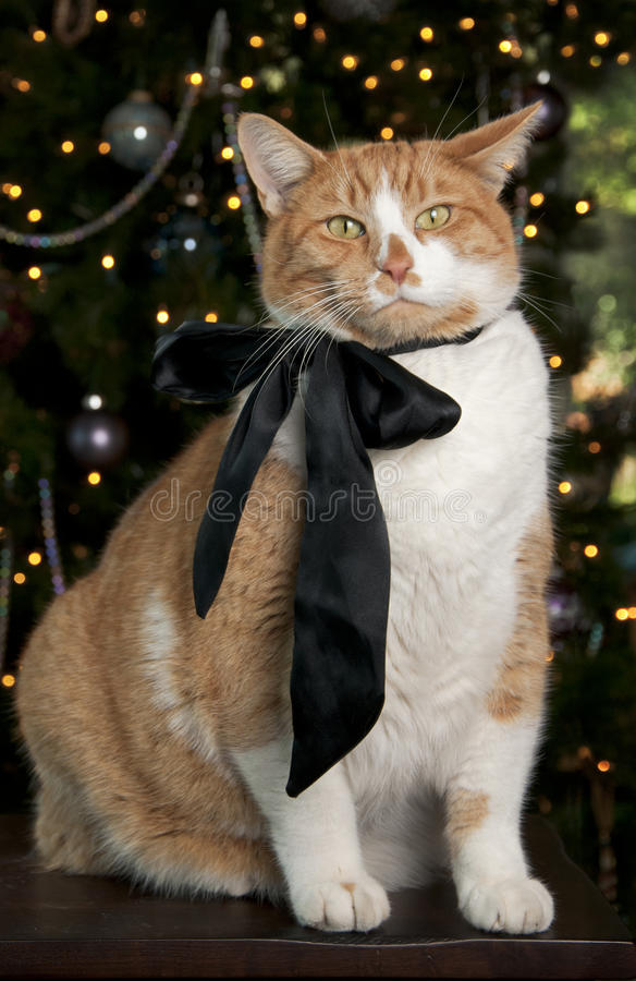 Free Orange Tabby Cat Stock Images - 17462064