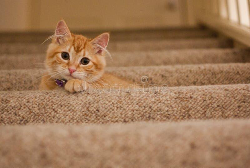 Orange Tabby Cat auf der grauen Treppe lizenzfreie stockfotos