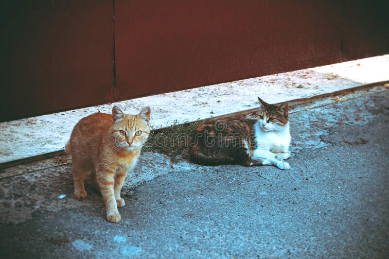 Orange Tabby Cat Beside Brown Tabby Cat in Gray Concrete Road royalty free stock photos