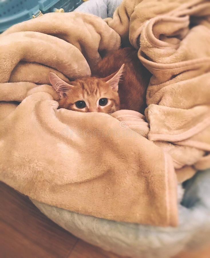 Orange Tabby Cat on Brown Textile stock images