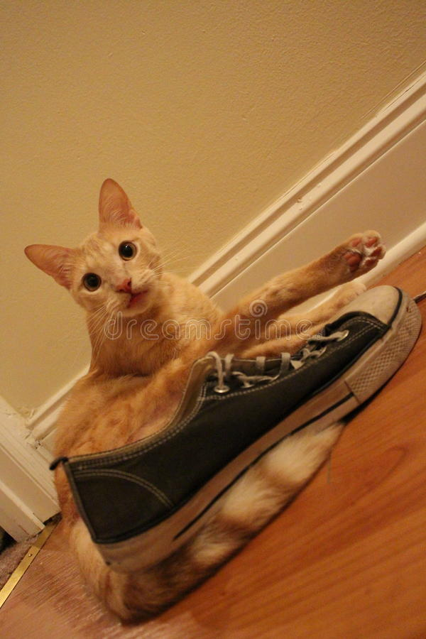 Orange tabby cat and his old sneaker stock photography