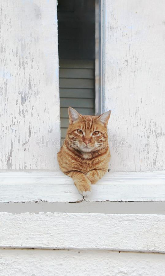 Orange tabby cat relaxes between weathered pillars royalty free stock image