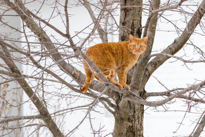 Orange Tabby Cat Up ein Baum stockbild