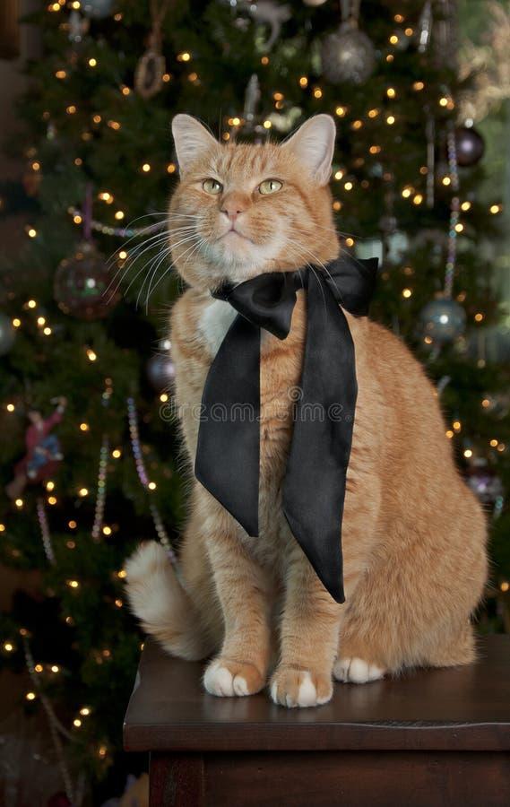 Orange Tabby-Katze lizenzfreie stockbilder