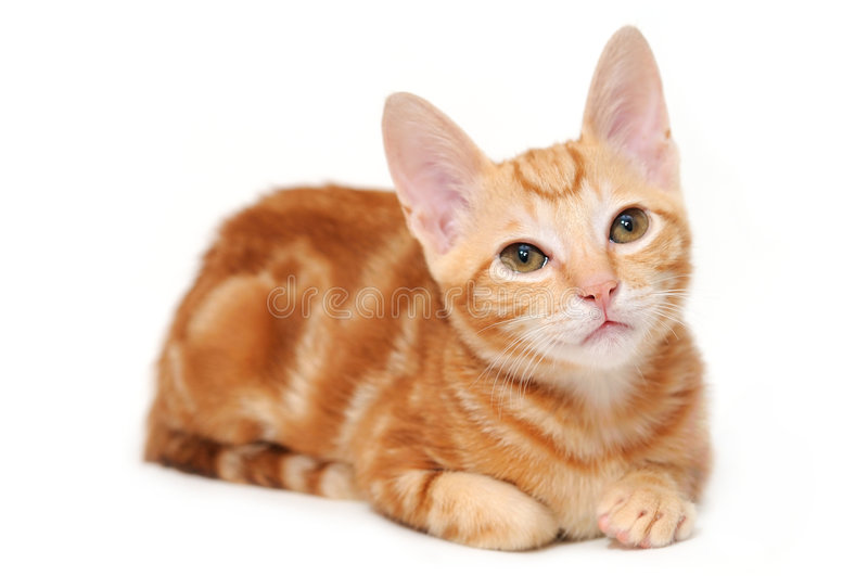 Download Orange tabby kitten stock photo. Image of domestic, tabby - 6322222