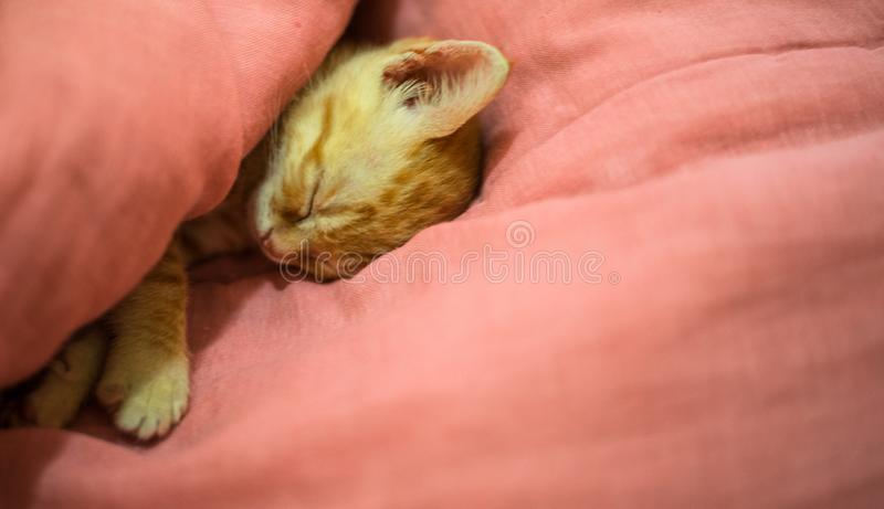 Orange tabby kitty cat sleeping in cute way. Orange tabby kitty cat sleeping in a cute way stock images