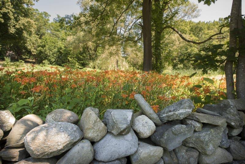 Orange Tag Lillies lizenzfreie stockfotos
