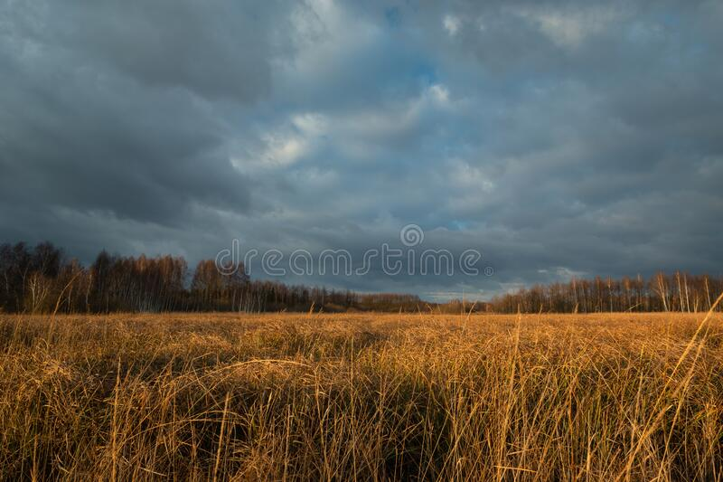 Orange tall grass, forest and stormy sky in Nowiny, Poland stock images
