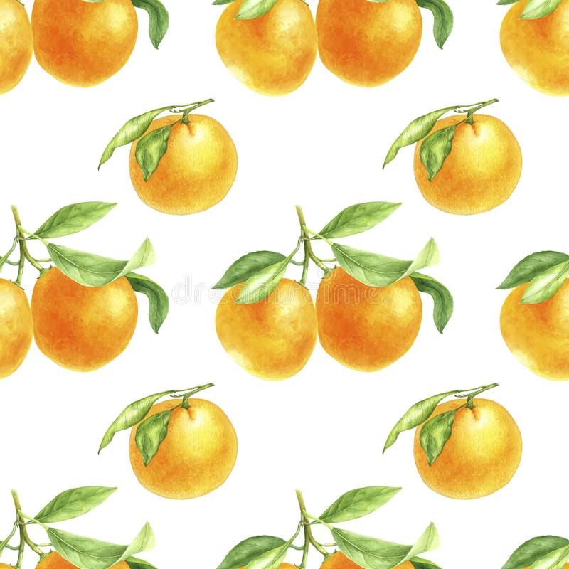 Orange tangerine drawing in watercolor. Watercolor seamless pattern with orange tangerines drawing in watercolor at white background, hand drawn botanical vector illustration