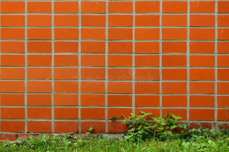Orange tegelstenvägg med den lilla gröna växten arkivbilder
