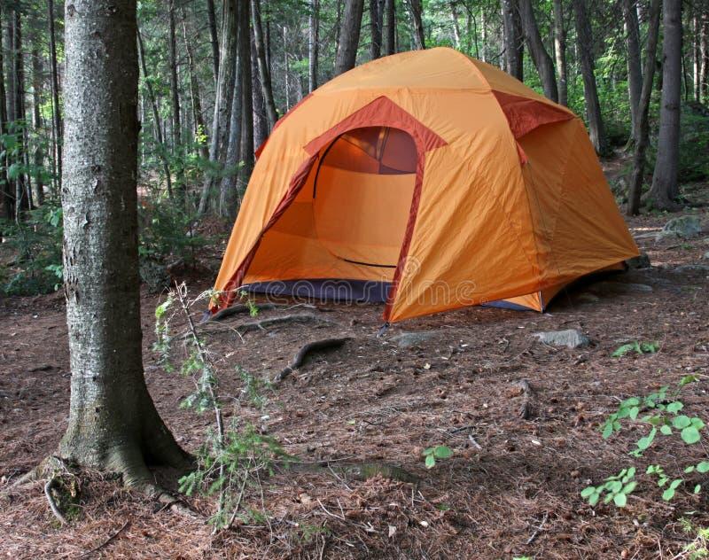 Orange Tent in the Woods stock image