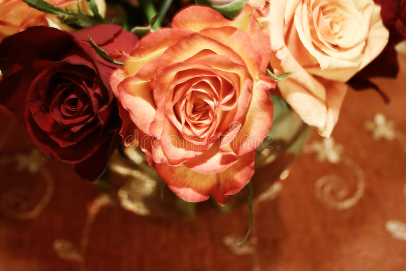 Orange thai roses 021 royalty free stock photos