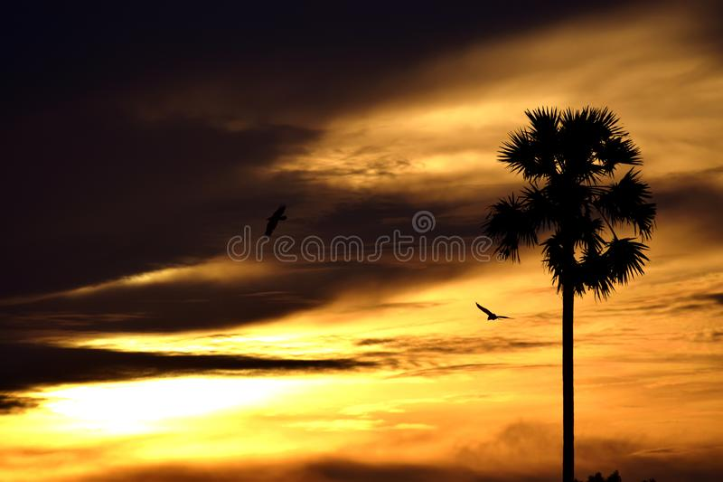 The orange tint of golden light. The lonely tree and the flying birds in the evening tint of golden light stock image