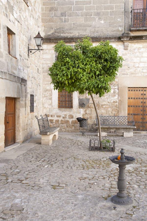 Orange träd i Juan de Valencia Square, Ubeda royaltyfri bild