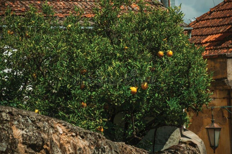 Orange träd laden med mogna frukter på en liten borggård arkivbilder