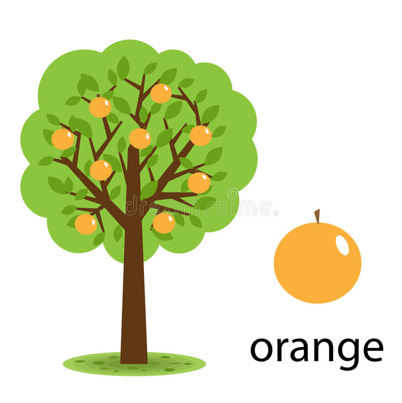Download Orange tree stock vector. Image of abstract, natural - 14894404