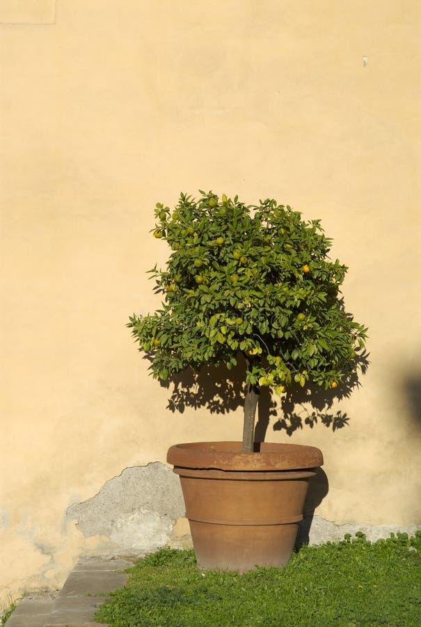 Download Orange tree stock photo. Image of plant, copyspace, italy - 1737022