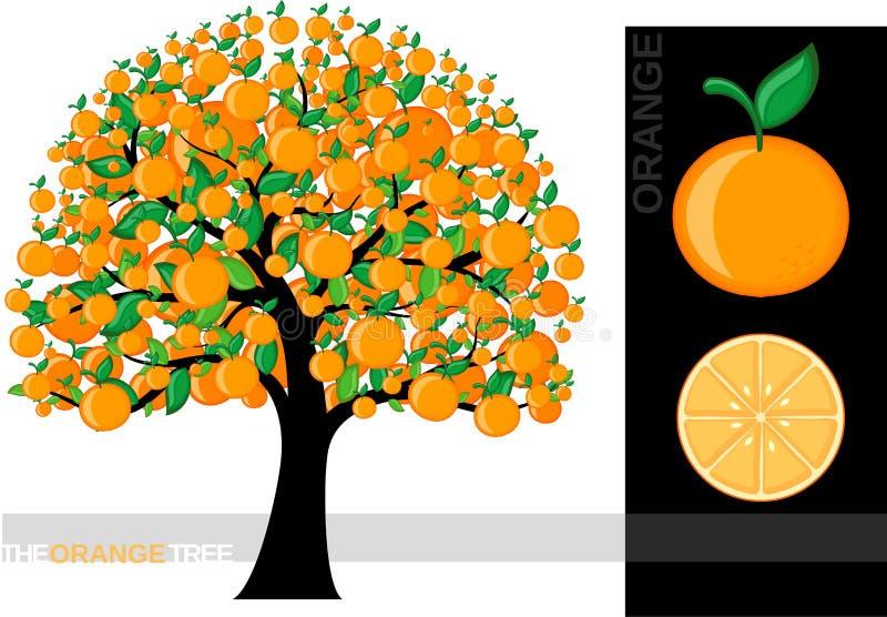 orange tree stock illustrationer