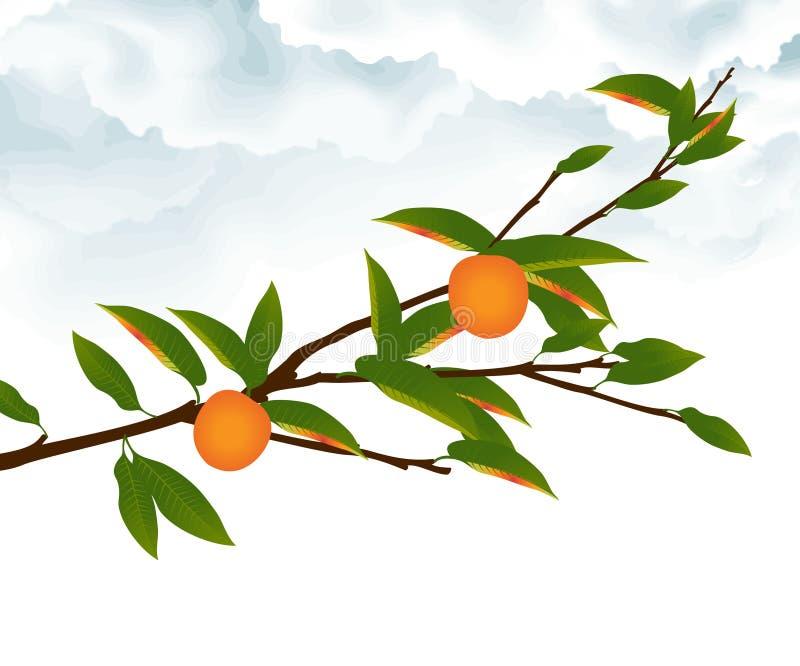 Orange tree branch stock vector. Illustration of foliage ...