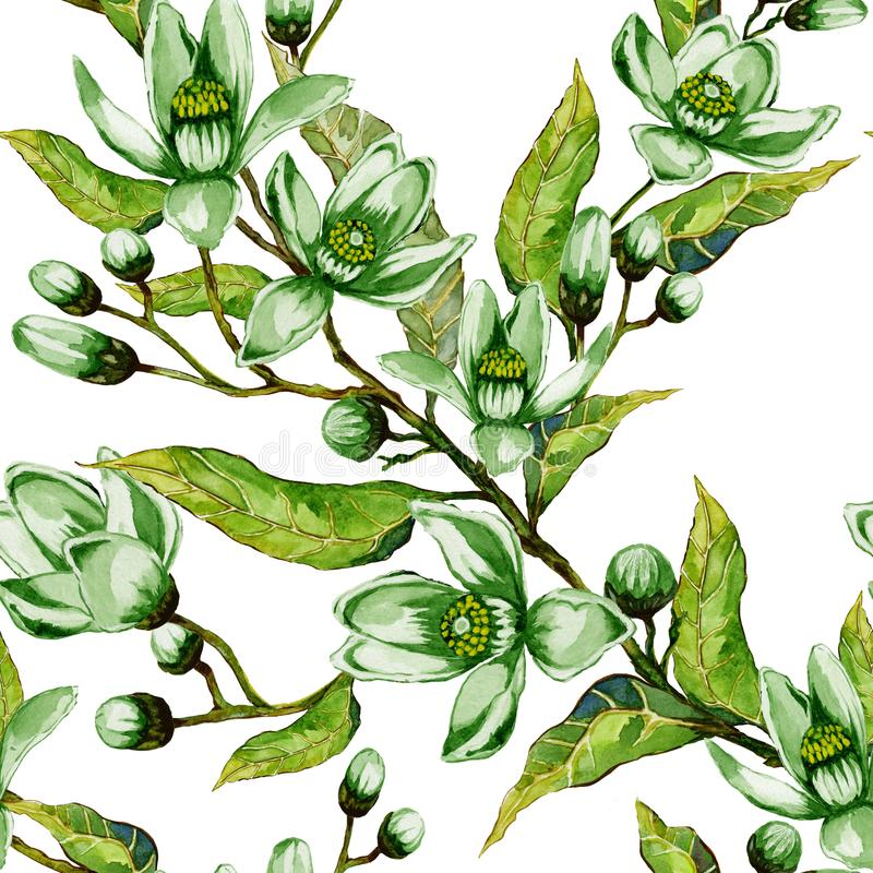 Orange tree flower in green color on a twig. Springtime seamless pattern. Spring flourish. White background. Watercolor painting vector illustration