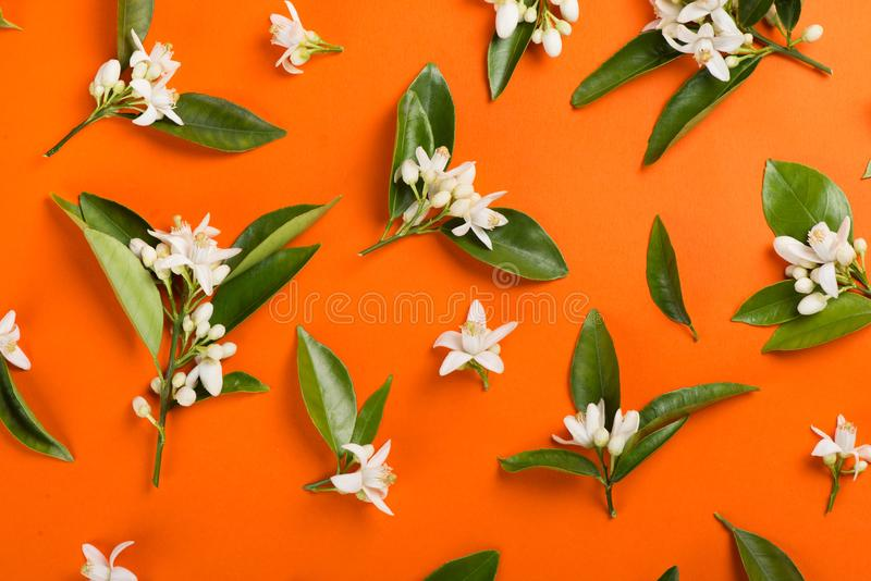 Orange tree flowers on a branches. Above view. royalty free stock photos