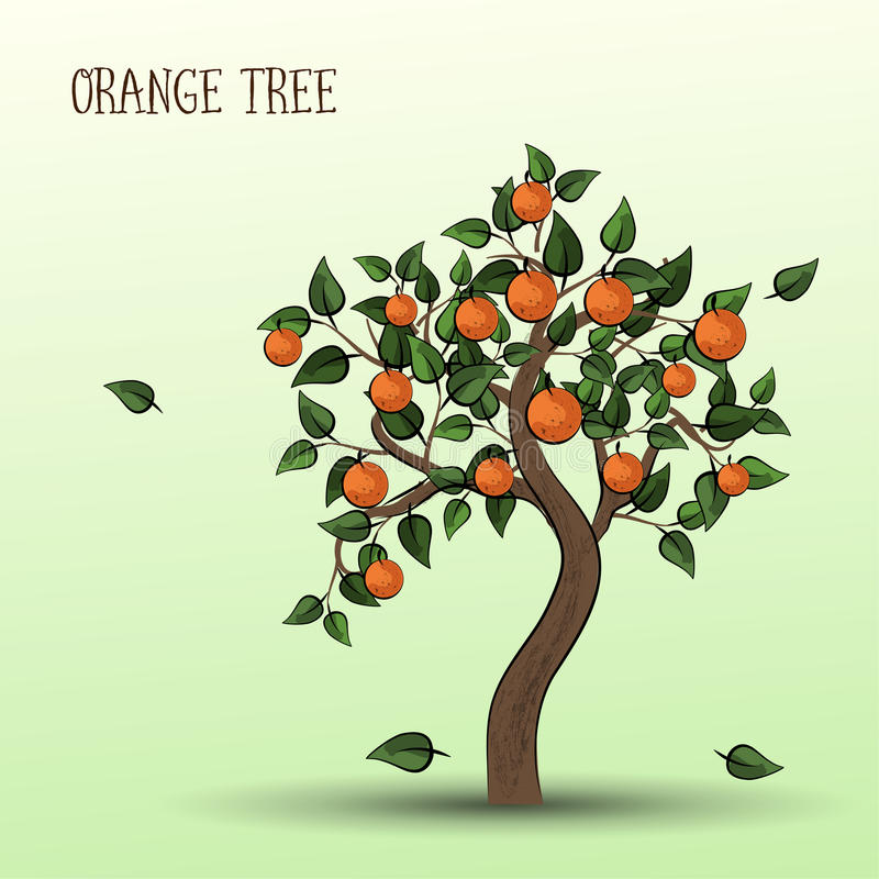 Orange tree with fruits oranges. Orange tree with green leaves and fruits oranges vector illustration