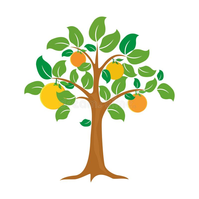 Orange tree vector illustration