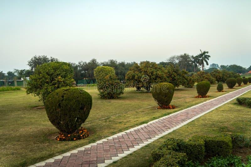 Orange tree in the park near Lotus temple in New Delhi, India. stock image