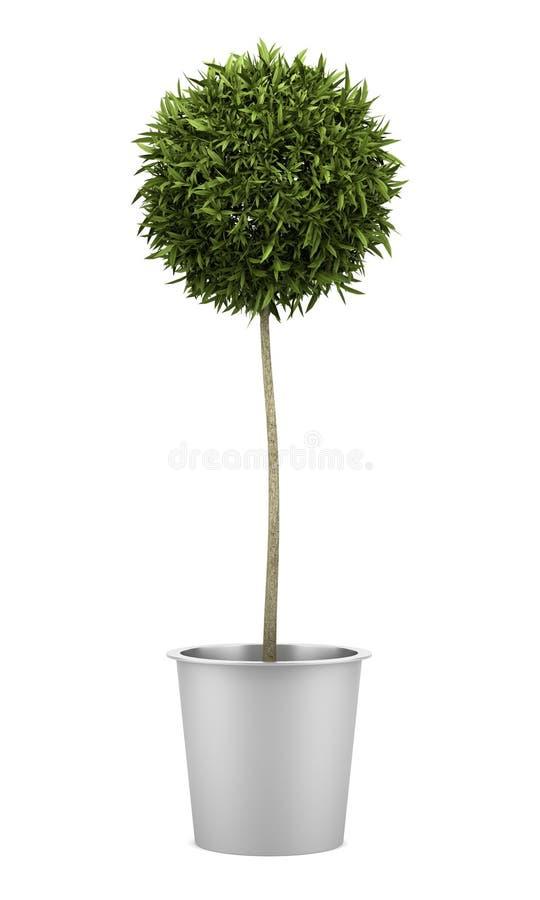 Orange tree in pot isolated on white royalty free illustration