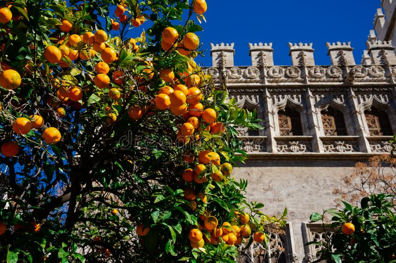 Orange tree with the Silk Exchange building royalty free stock photography