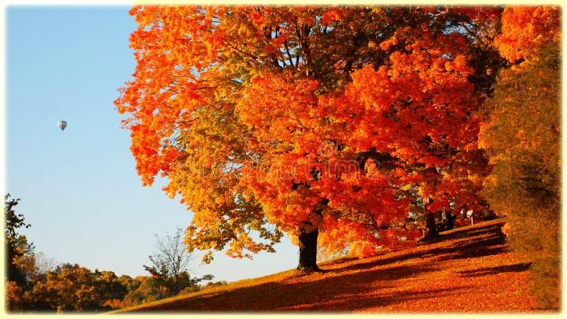 Orange Trees Autumn Forest Free Public Domain Cc0 Image