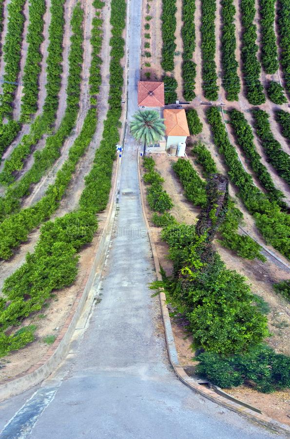 Orange trees field. Aerial view of an Orange trees field in Valencia, Spain stock images