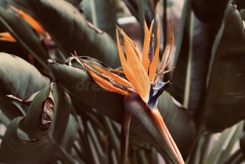 Orange tropische Blume im Sommerzeithintergrundgrün lizenzfreie stockfotografie