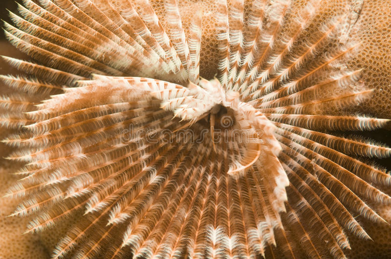 Orange tube worm stock photography