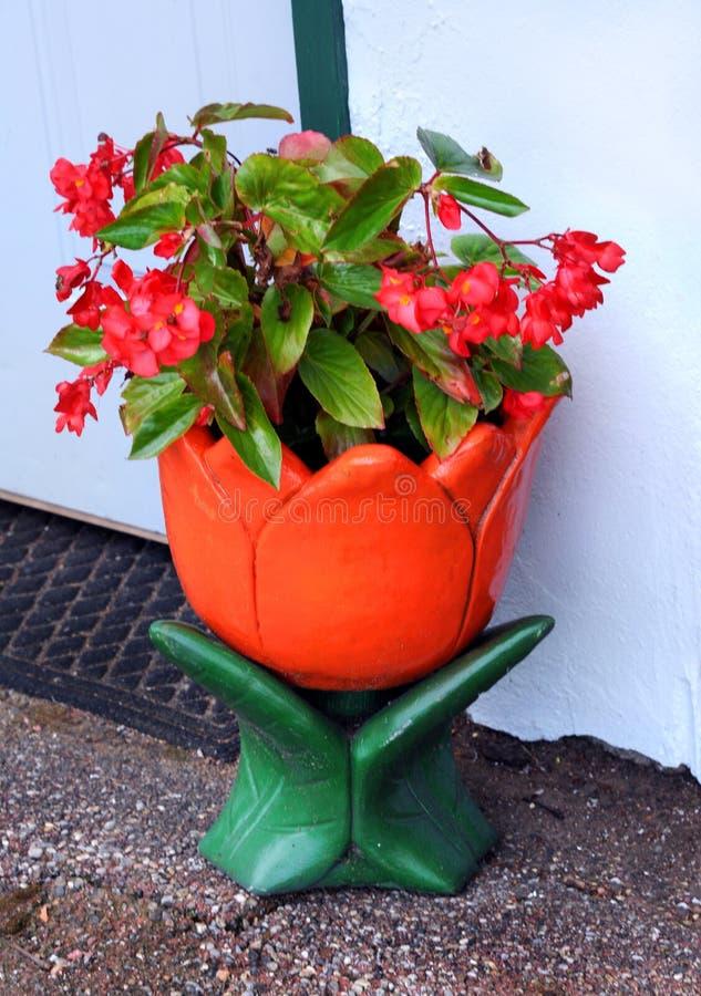 Orange Tulip Planter med blommor royaltyfria bilder