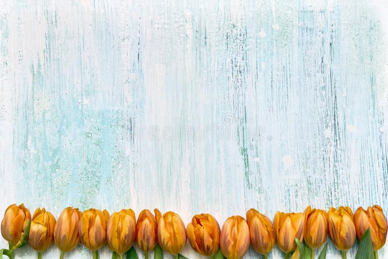 Orange tulips border on light blue background. Copy space, top view. Holiday background. Flat lay of International Women`s Day, birthday, Mothers Day concept stock photos