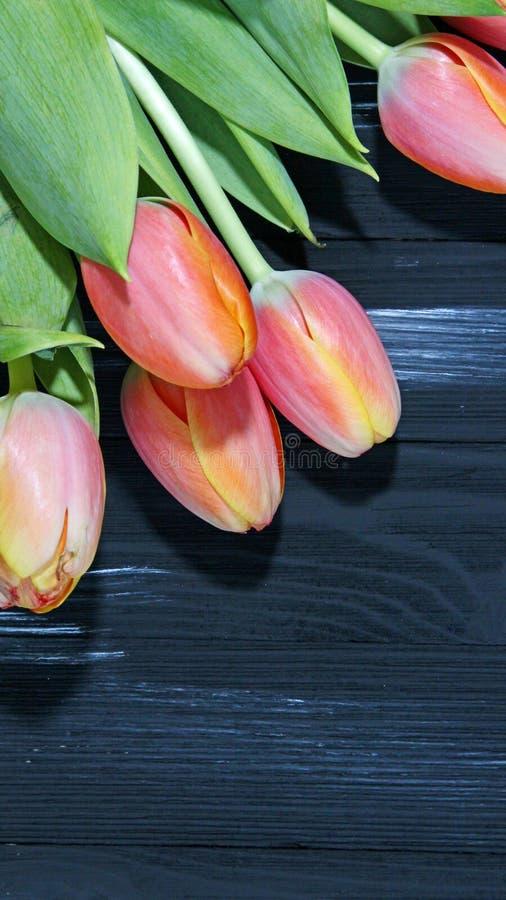 Download Orange Tulips Stock Photo - Image: 88858426