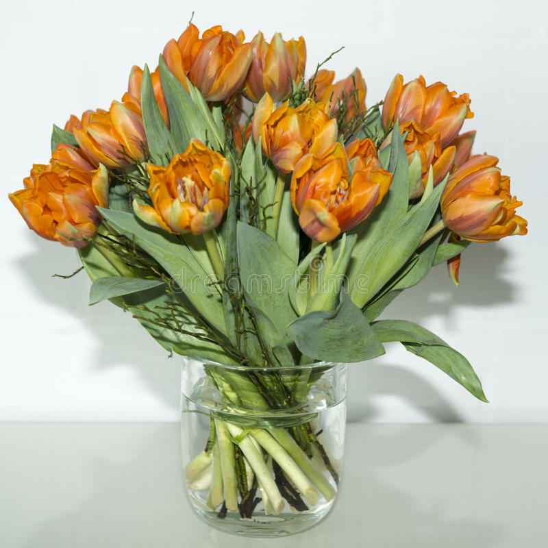 Orange tulips in vase stock photo. Image of flowers, green ...