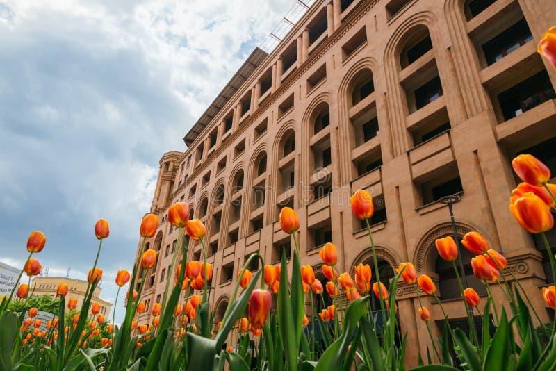 Orange tulpan framme av den monumentala byggnaden, Yerevan royaltyfria foton