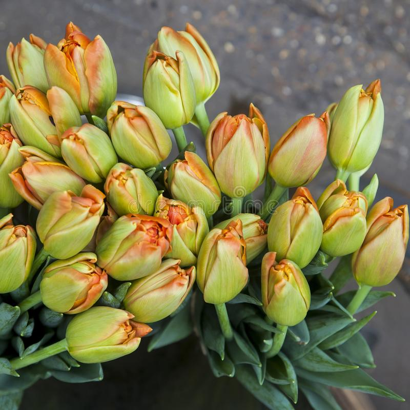 Orange Tulpen im Blumenstrau? als sch?nen Hintergrund stockfotos