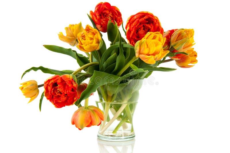 Orange und gelbe Tulpen lizenzfreies stockbild