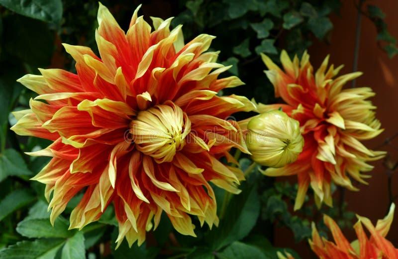 Orange und gelber Blumenabschluß oben stockbild