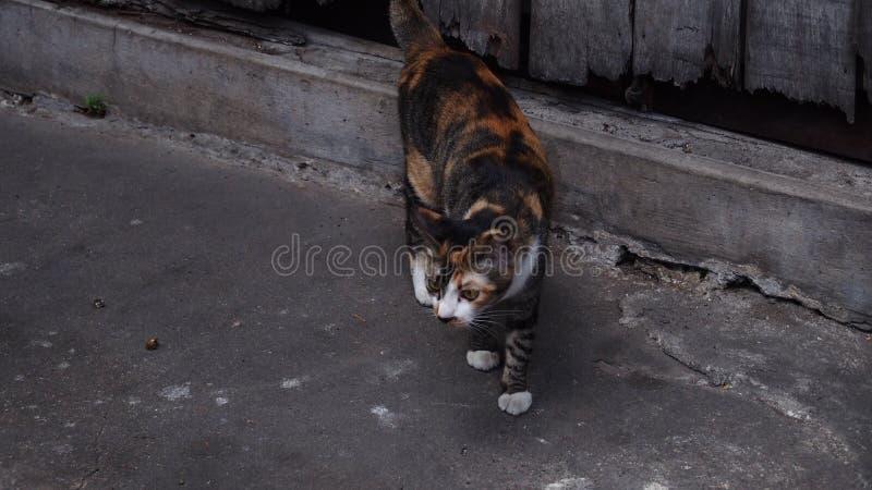 Orange und schwarzes Kätzchen mit grauem Ton backgroud lizenzfreie stockfotos