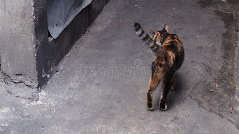 Orange und schwarzes Kätzchen mit grauem Ton backgroud stockbilder